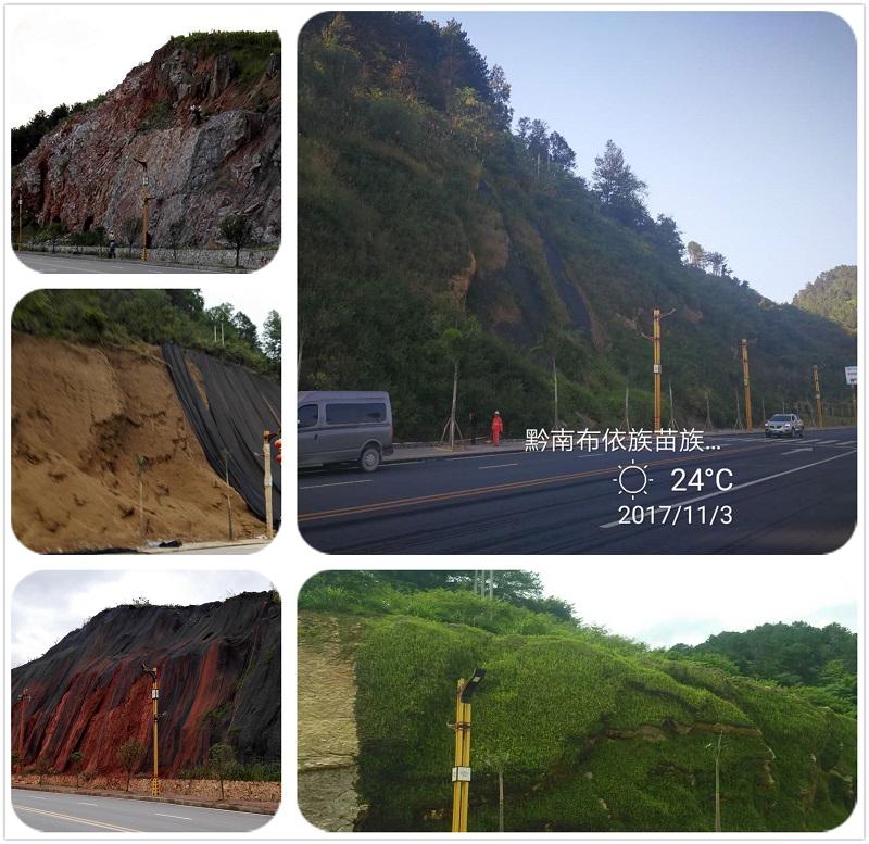 荔波边坡绿化