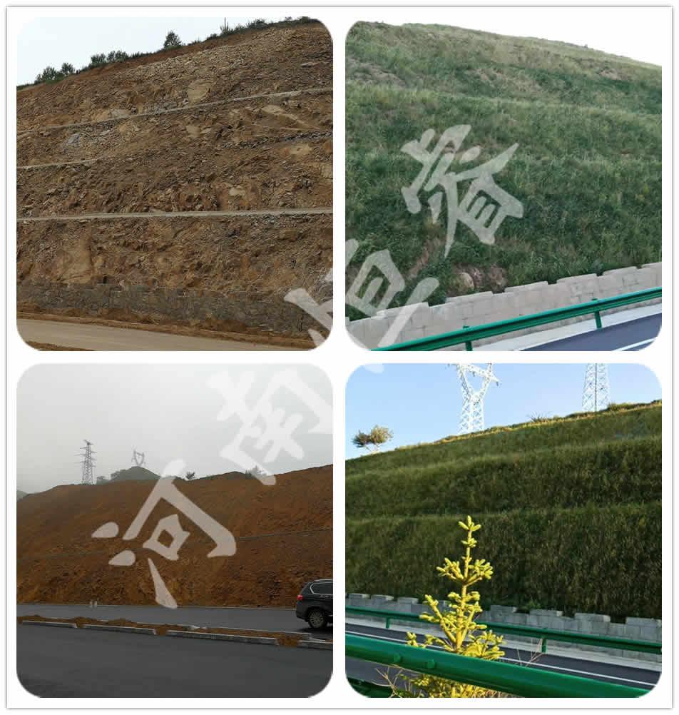凉城快速路边坡绿化
